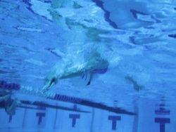 לימוד שחייה בשיטת WEST